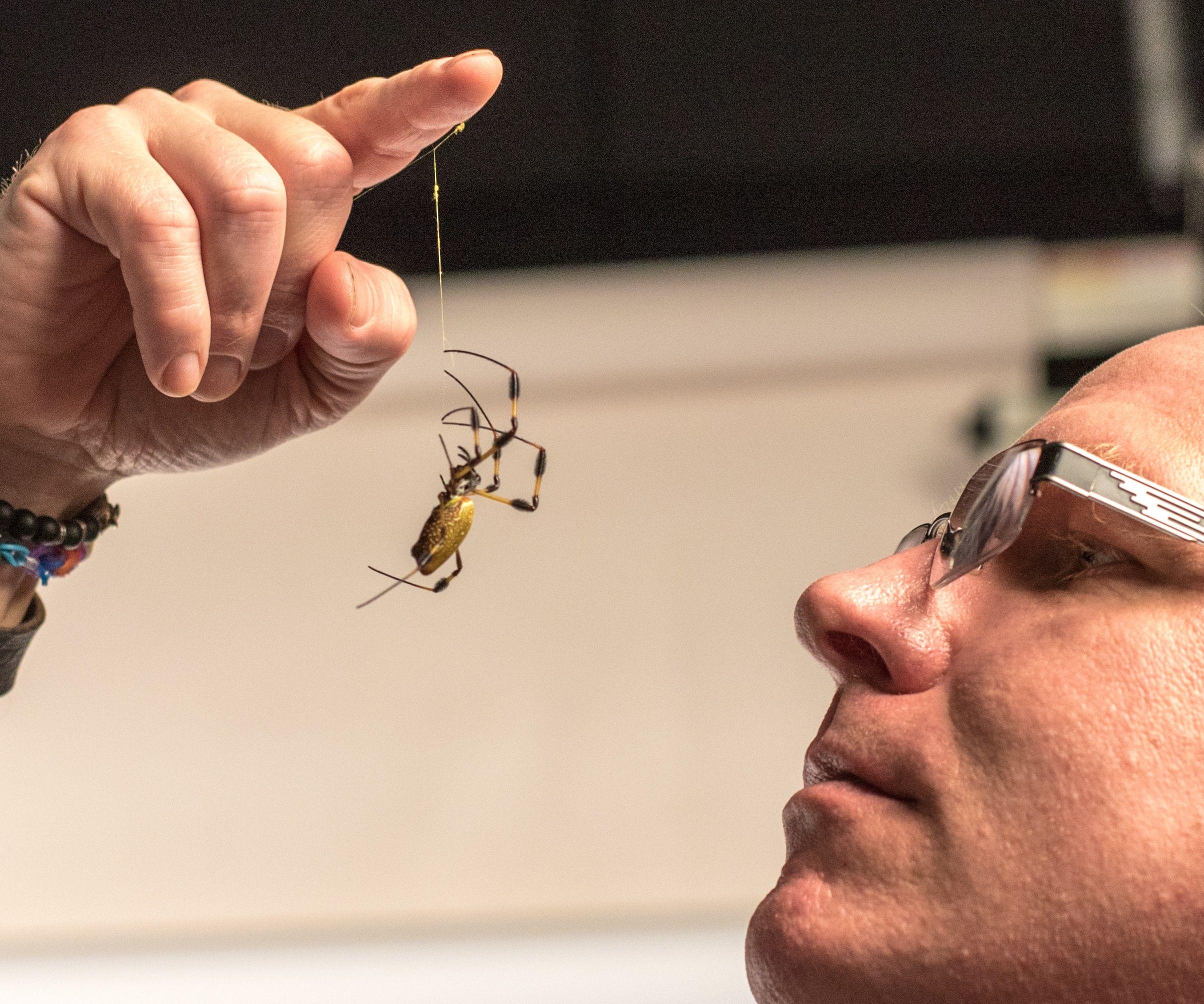 Agnarrson_with_Nephilia_Spider