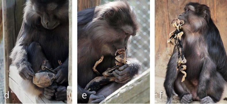 09_27_Cannibalism_Monkey_2