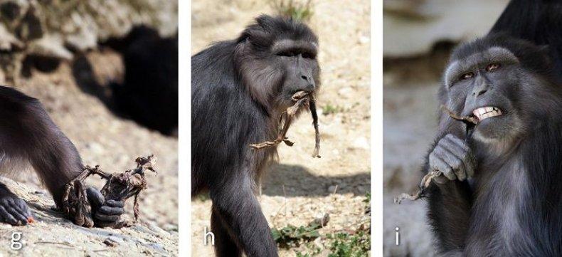 09_27_Cannibalism_Monkey_3