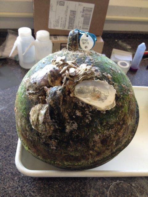 09_28_tsunami_debris_oyster