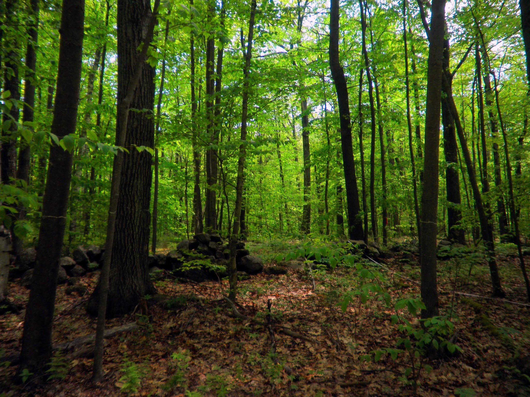 10_05_forest_microbe_carbon