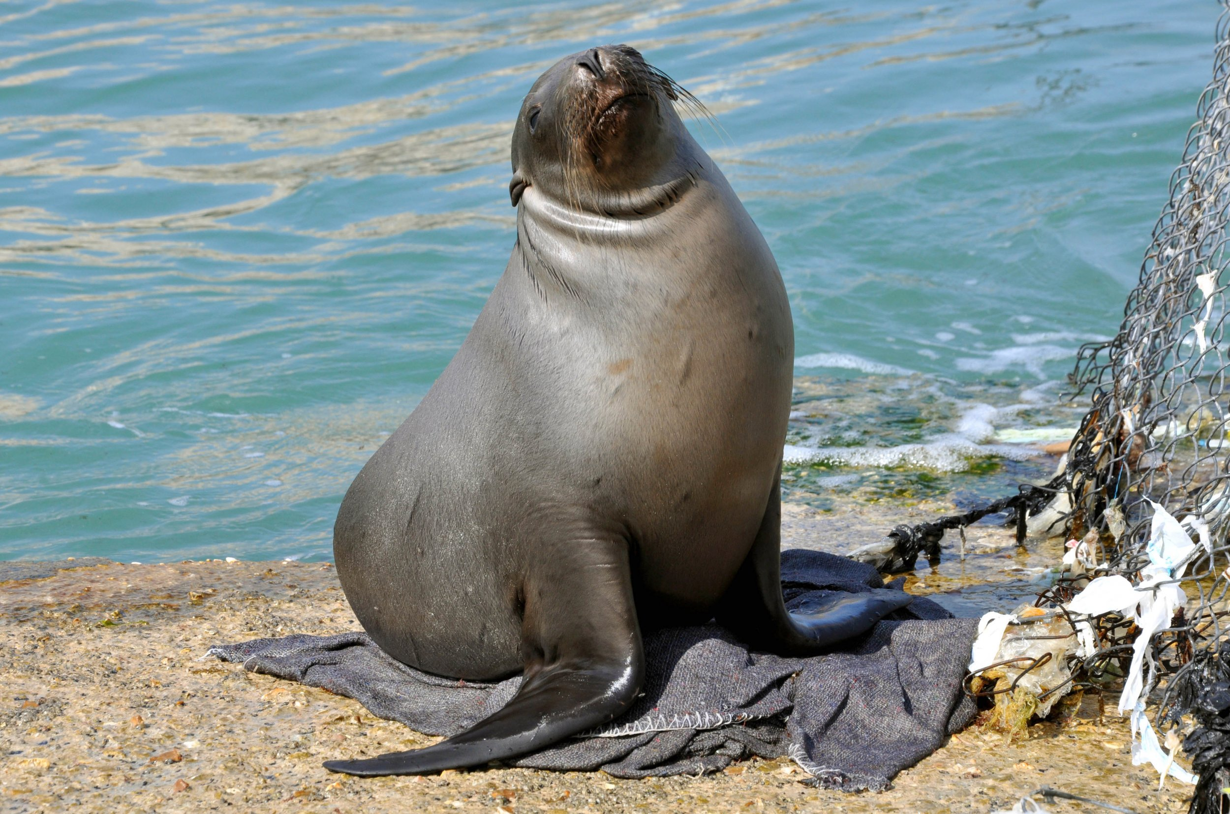 10_10_harbour_seal