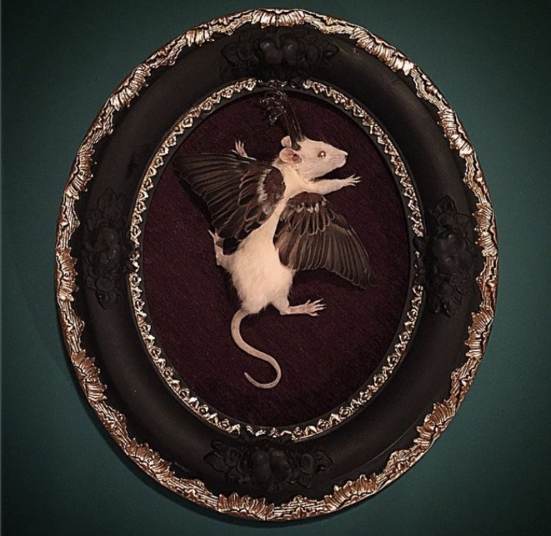 Winged_Rat_Alternative_Taxidermy
