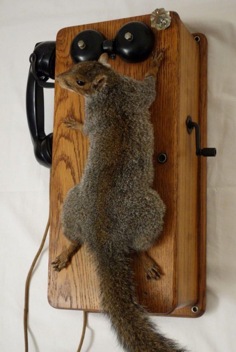 Squirrel_Telephone_Alternative_Taxidermy