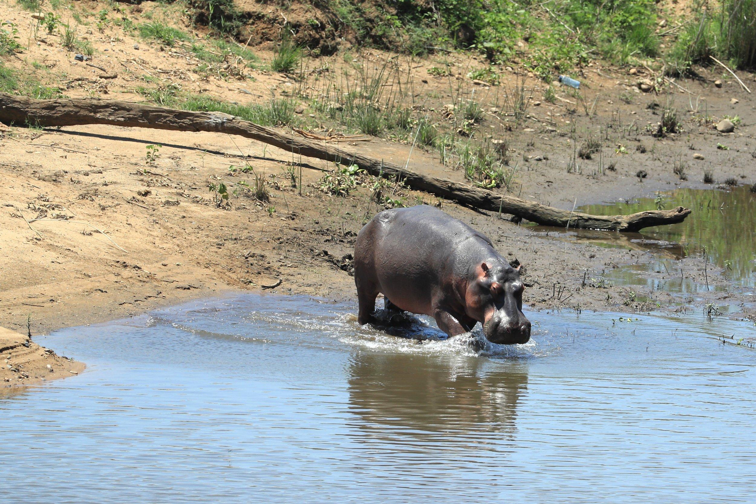 10_12_hippo