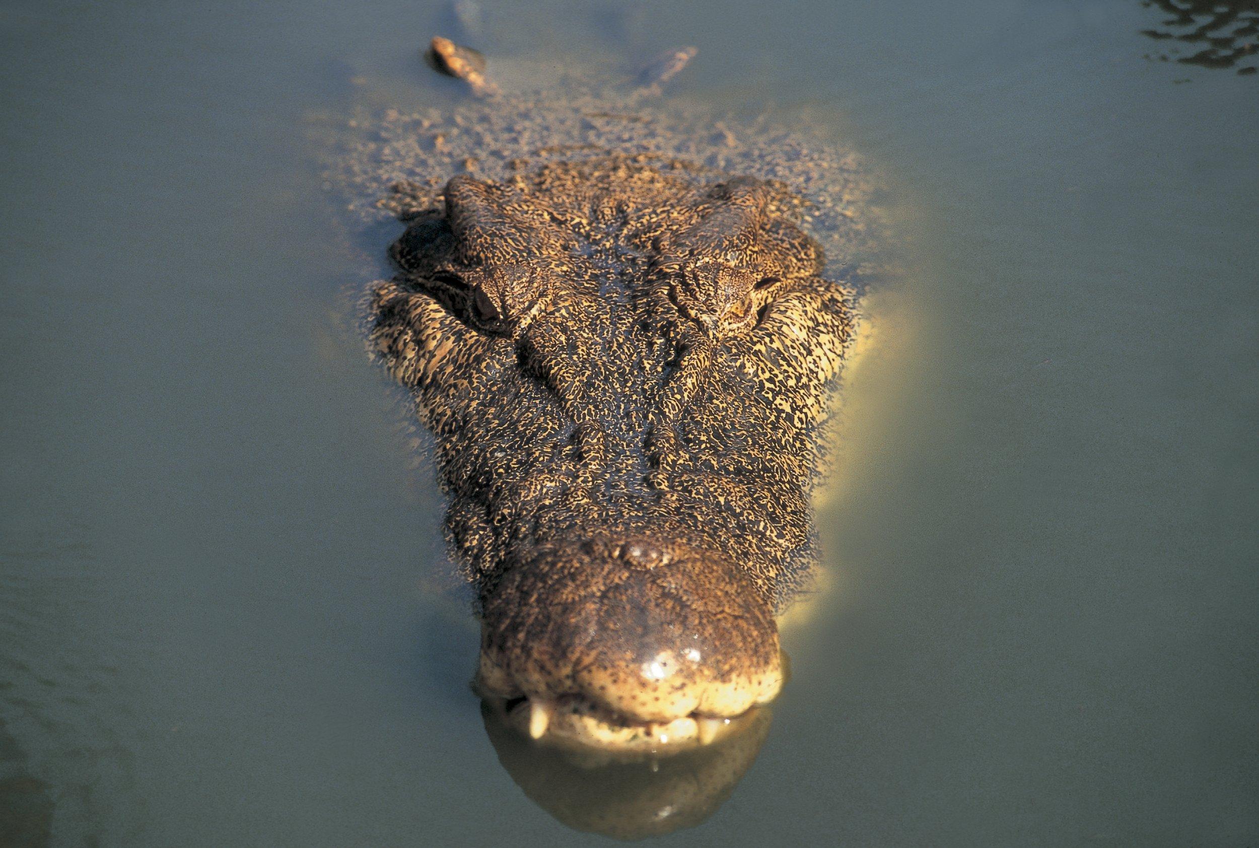 10_13_Croc