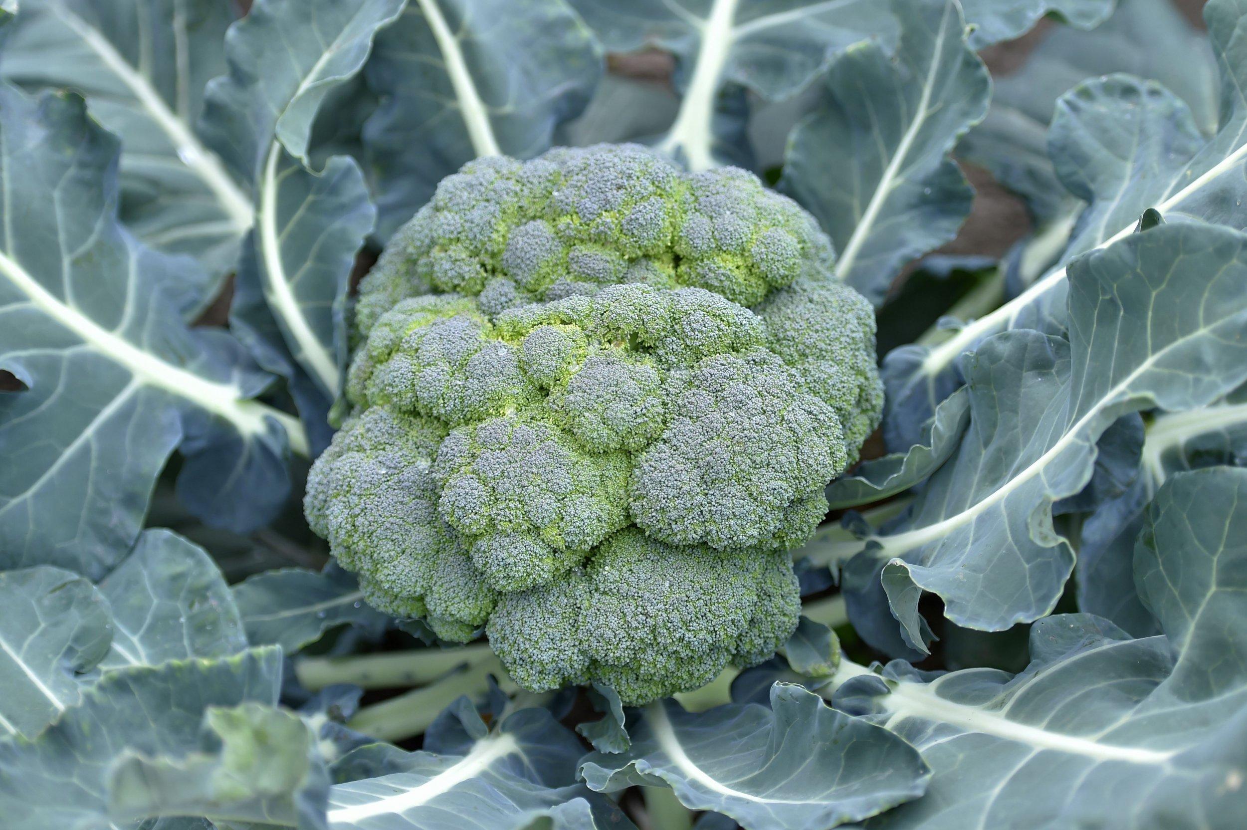 10_13_broccoli