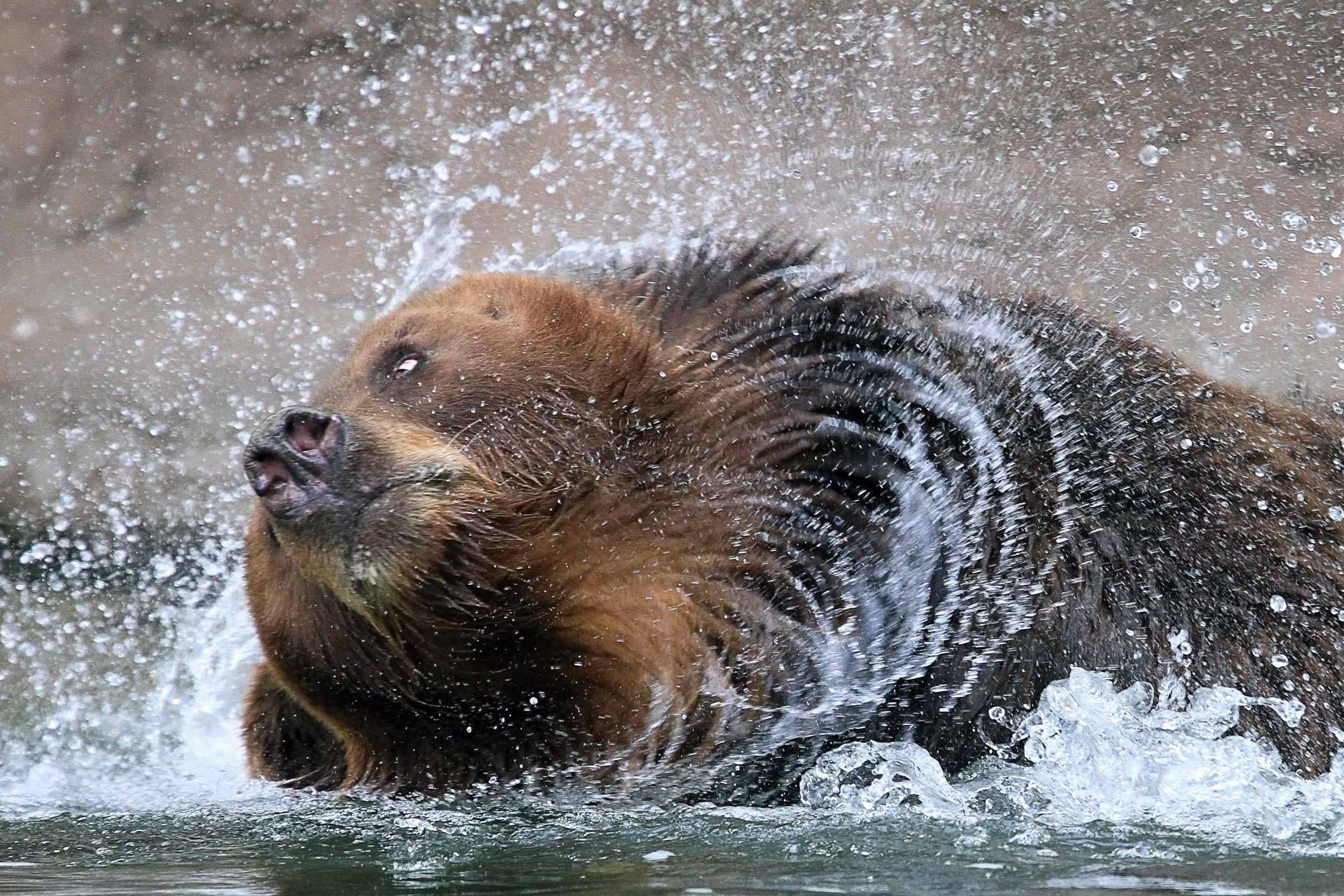 10_16_Russian_Bears