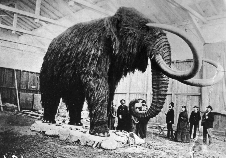 Stuffed_Mammoth