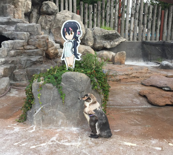 Image result for grape kun penguin