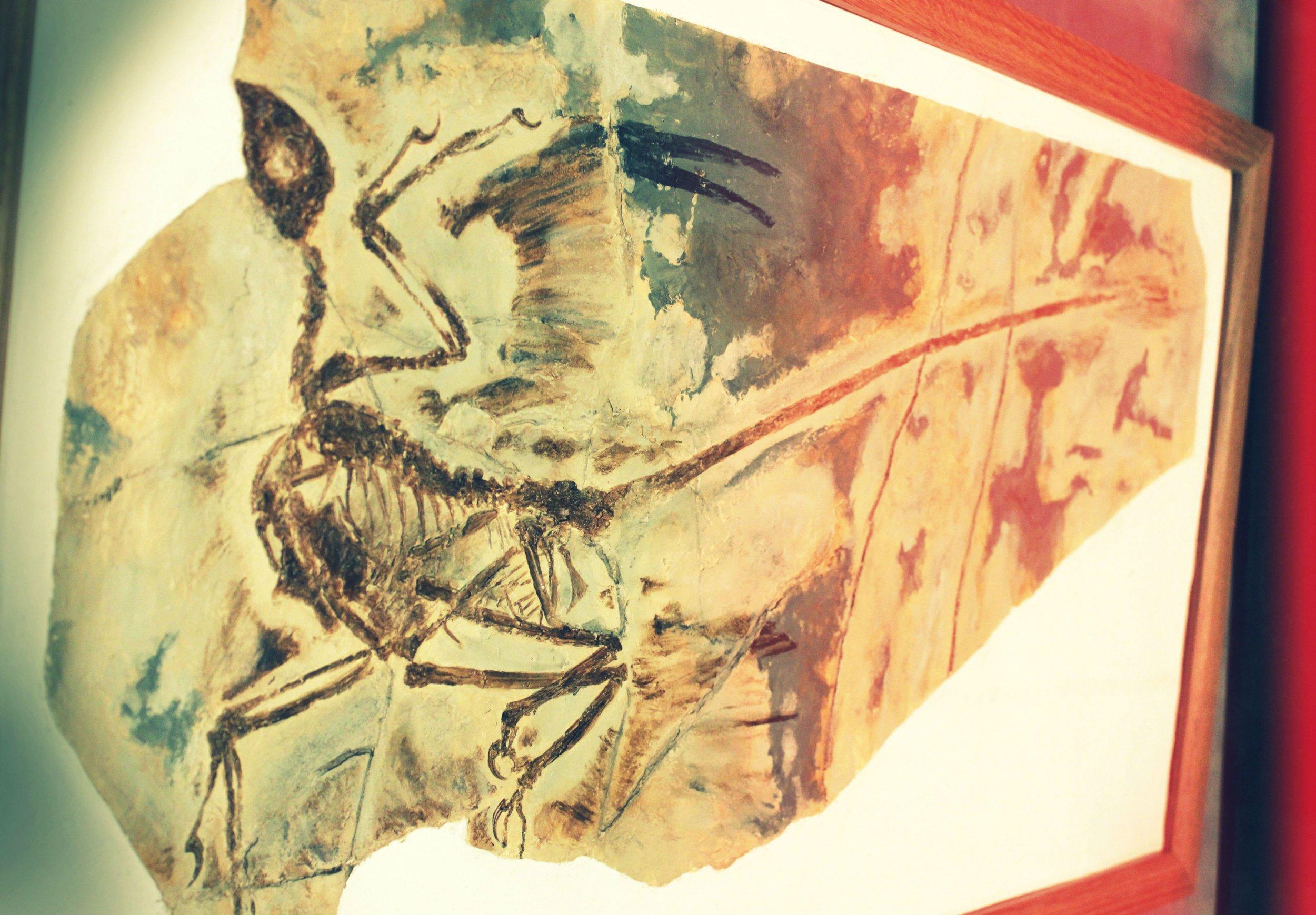 microcraptor_feathered_dinosaur