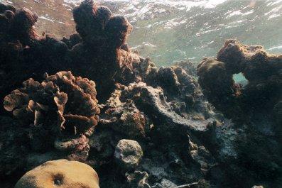 10_20_coral_bleaching