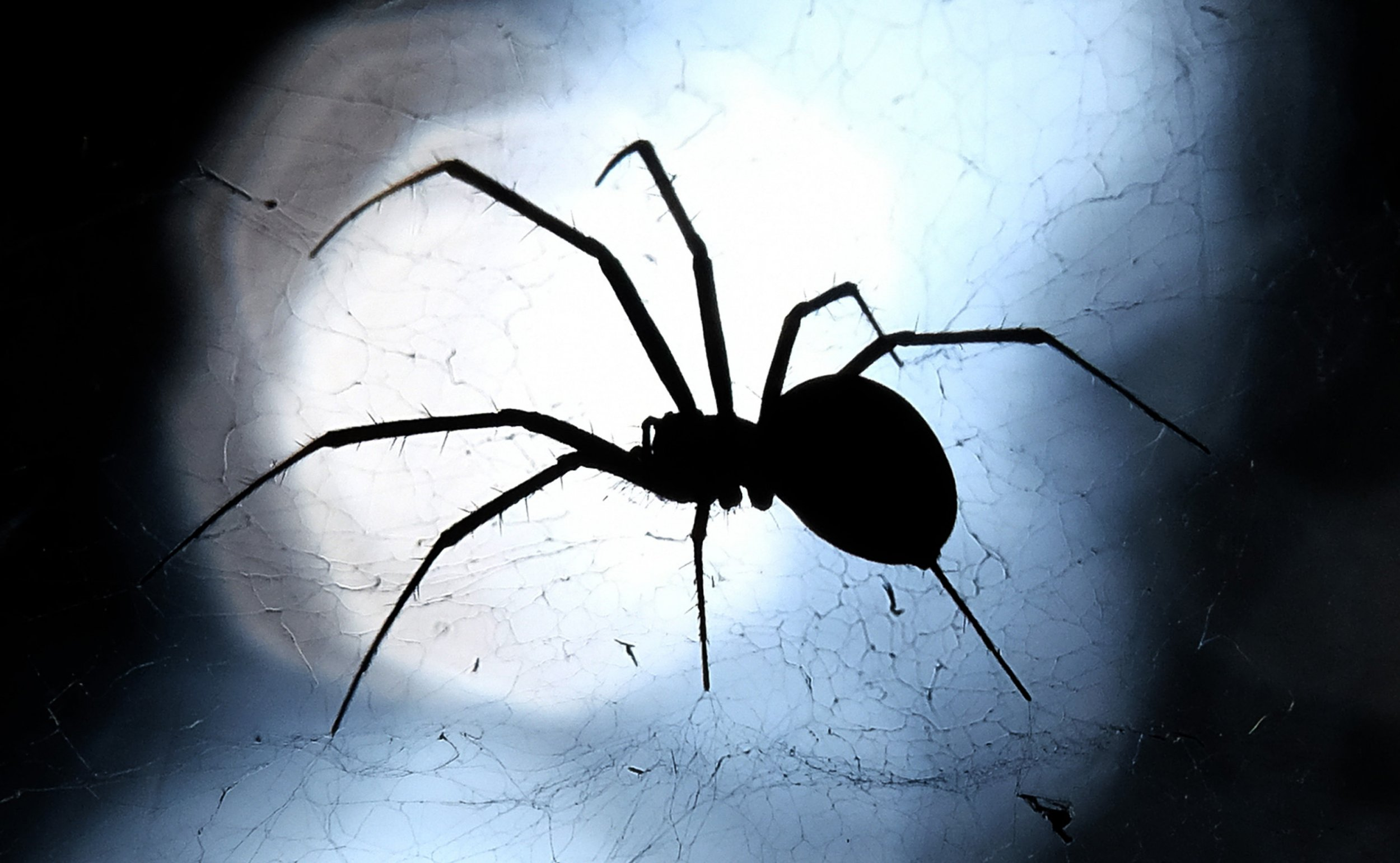 10_20_spider