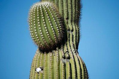 amazon headquarters hq2 cactus bid