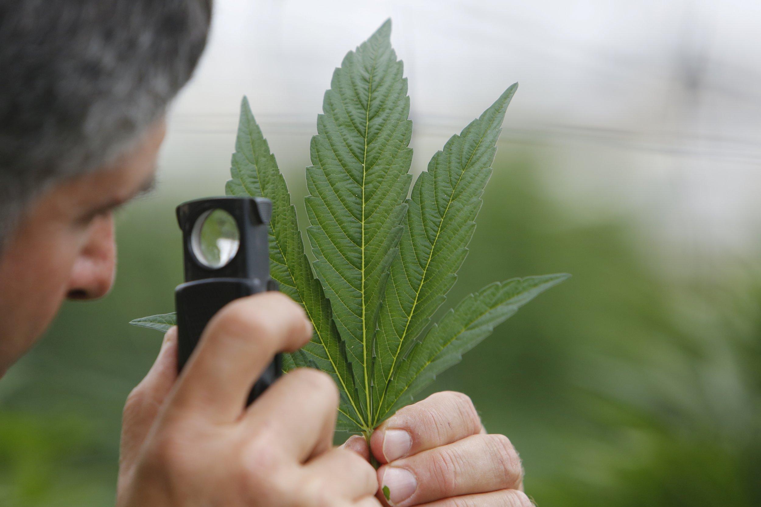 10_24_LegalizedMarijuanaRecreational