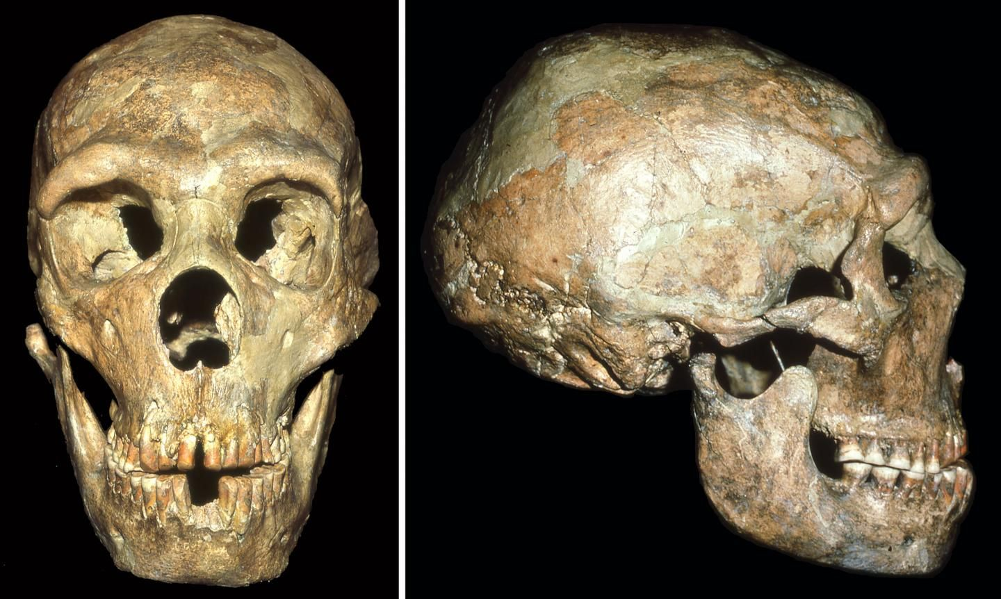 Russia Prehistoric Remains Show Humans Knew Not To Have -1308