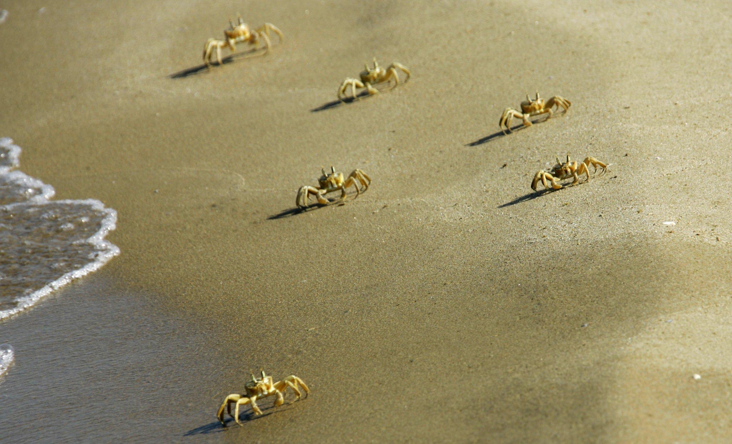 10_24_crabs_prozac