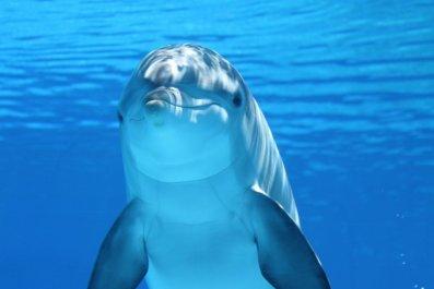 dolphin-203875_1920