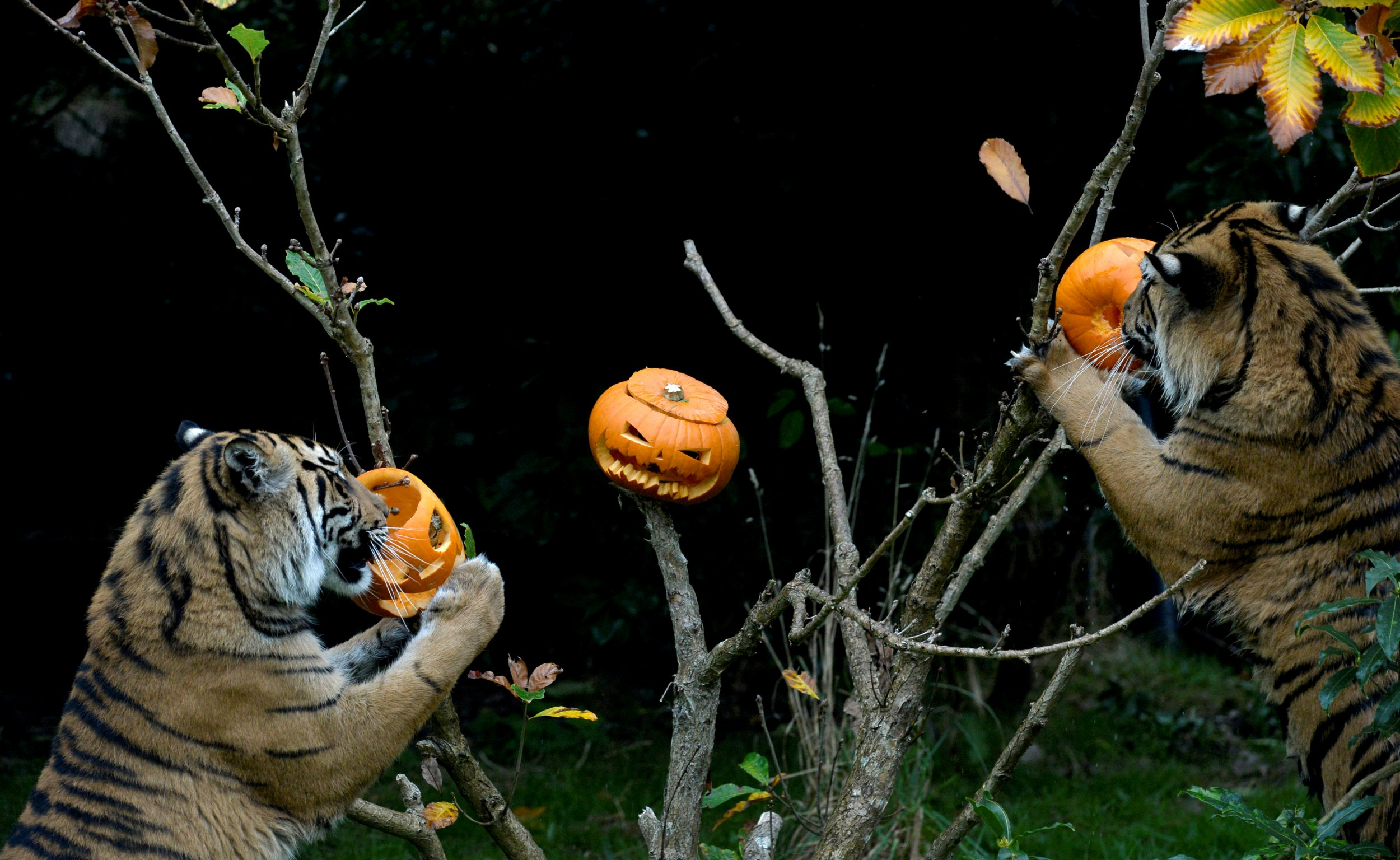 Halloween Music Playlist.Halloween Music A Spooky Party Playlist Featuring Monster Mash