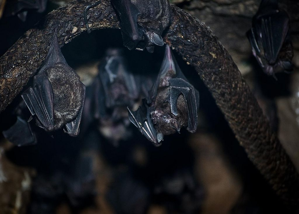 Bats_in_cave