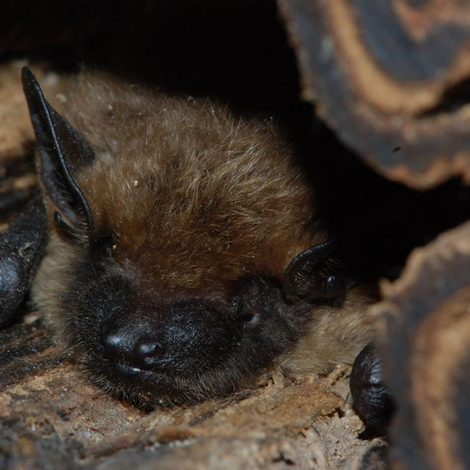 When You Should Be Worried About Getting Rabies From a Bat
