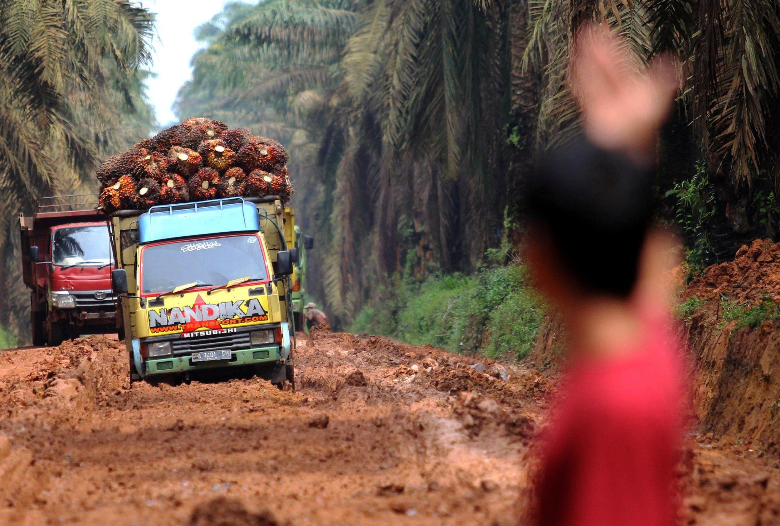 palm oil fruit trucks