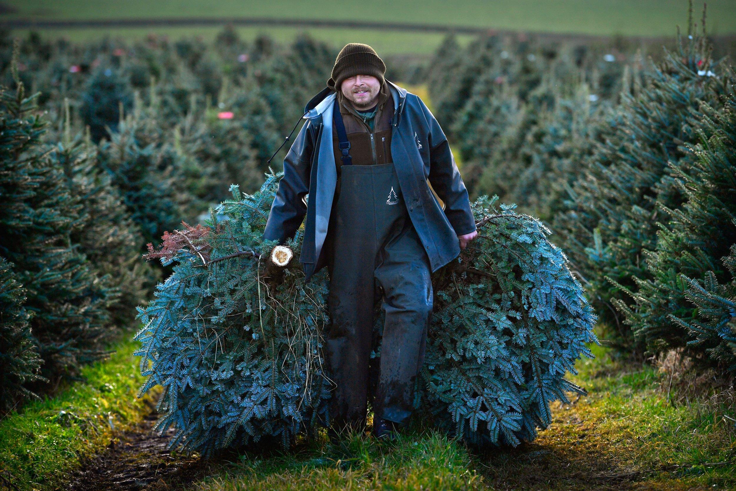 1101_Christmas_Tree_Prices
