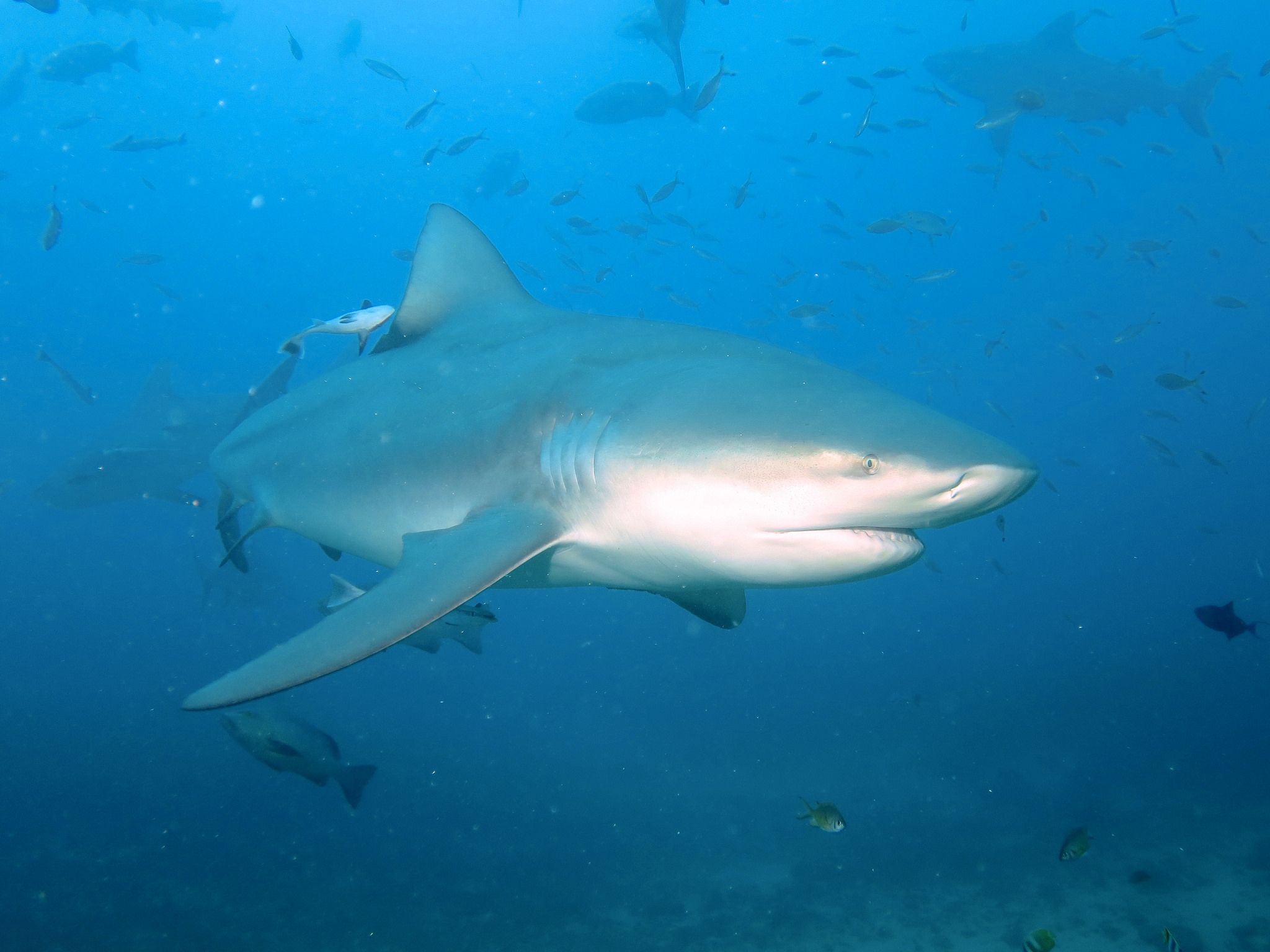 What Country Has the Most Fatal Shark Attacks?