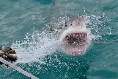 11_02_ great white shark