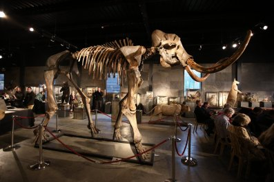 11_02_woolly_mammoth