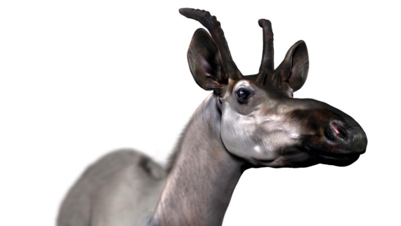 Decennatherium_rex_giraffid