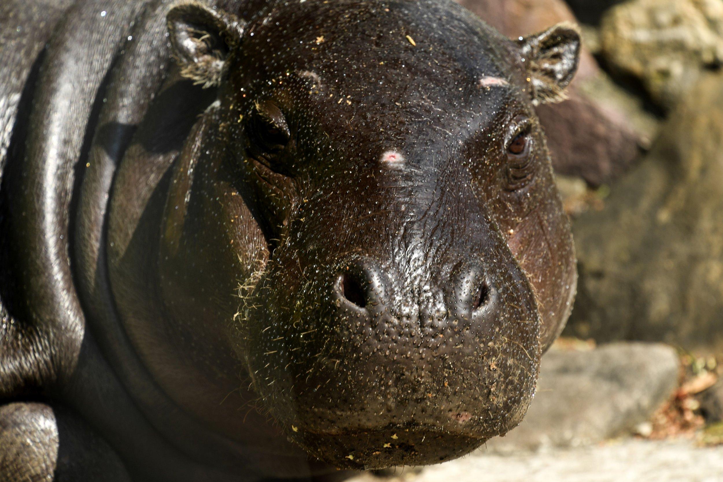 11_2_hippo