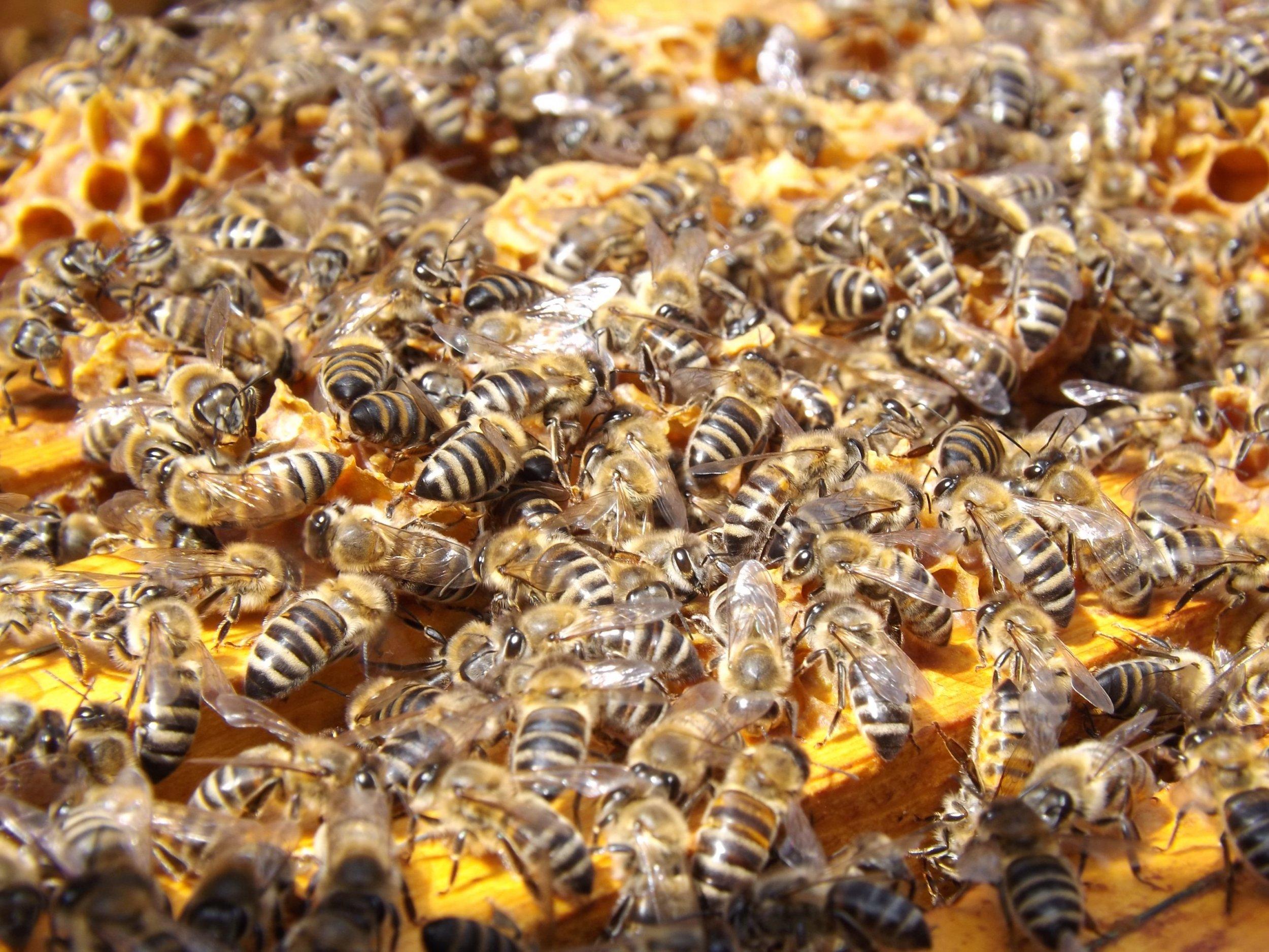11_03_Honeybees_Beehive