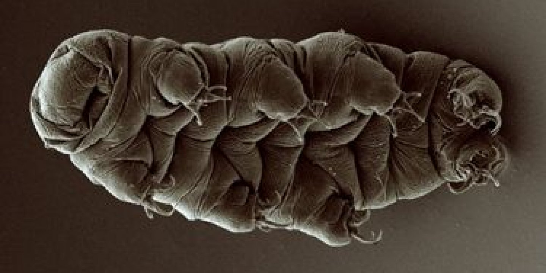 11_03_water_bear_tardigrade_social