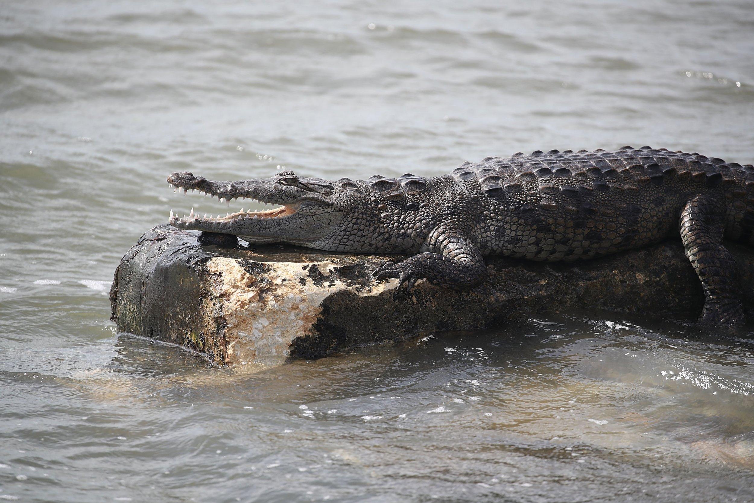 11_4_Crocodile