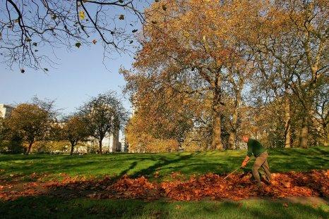 leaves- Rand Paul