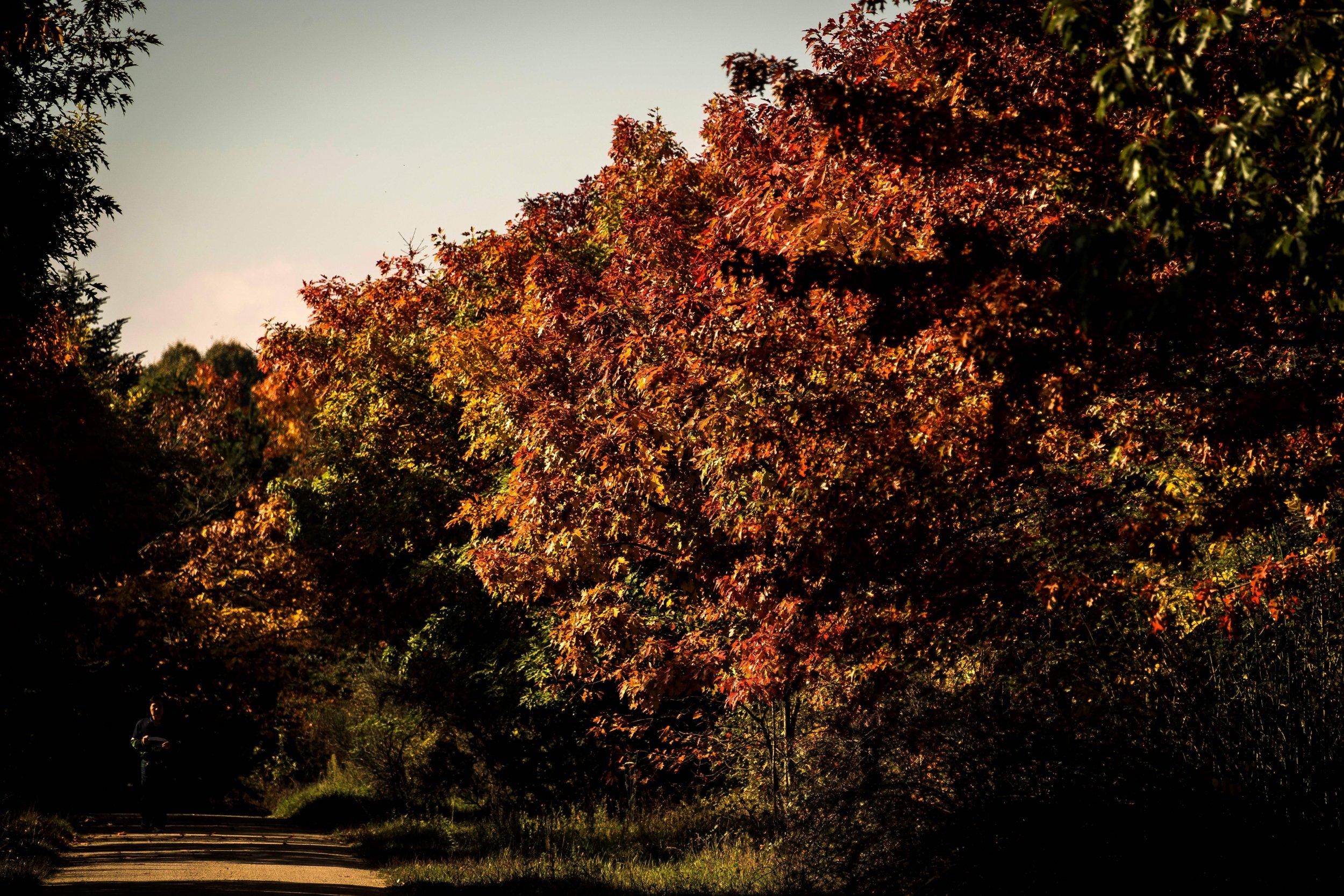11_7_leaves