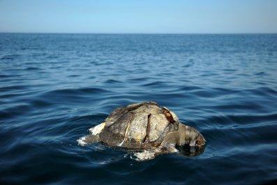 Dead_Sea_Turtle