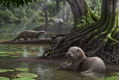 11_08_siamogale_giant_otter