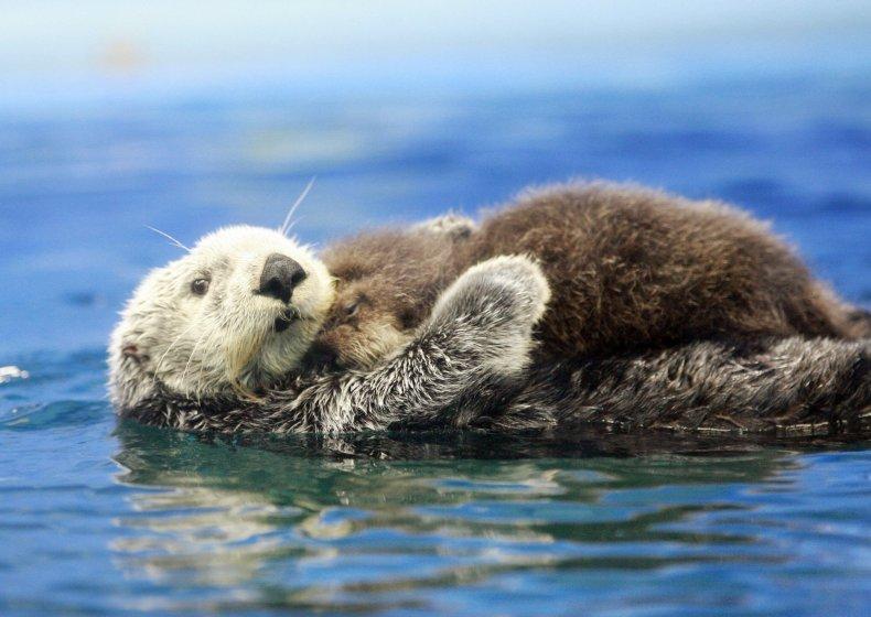 11_09_sea_otter