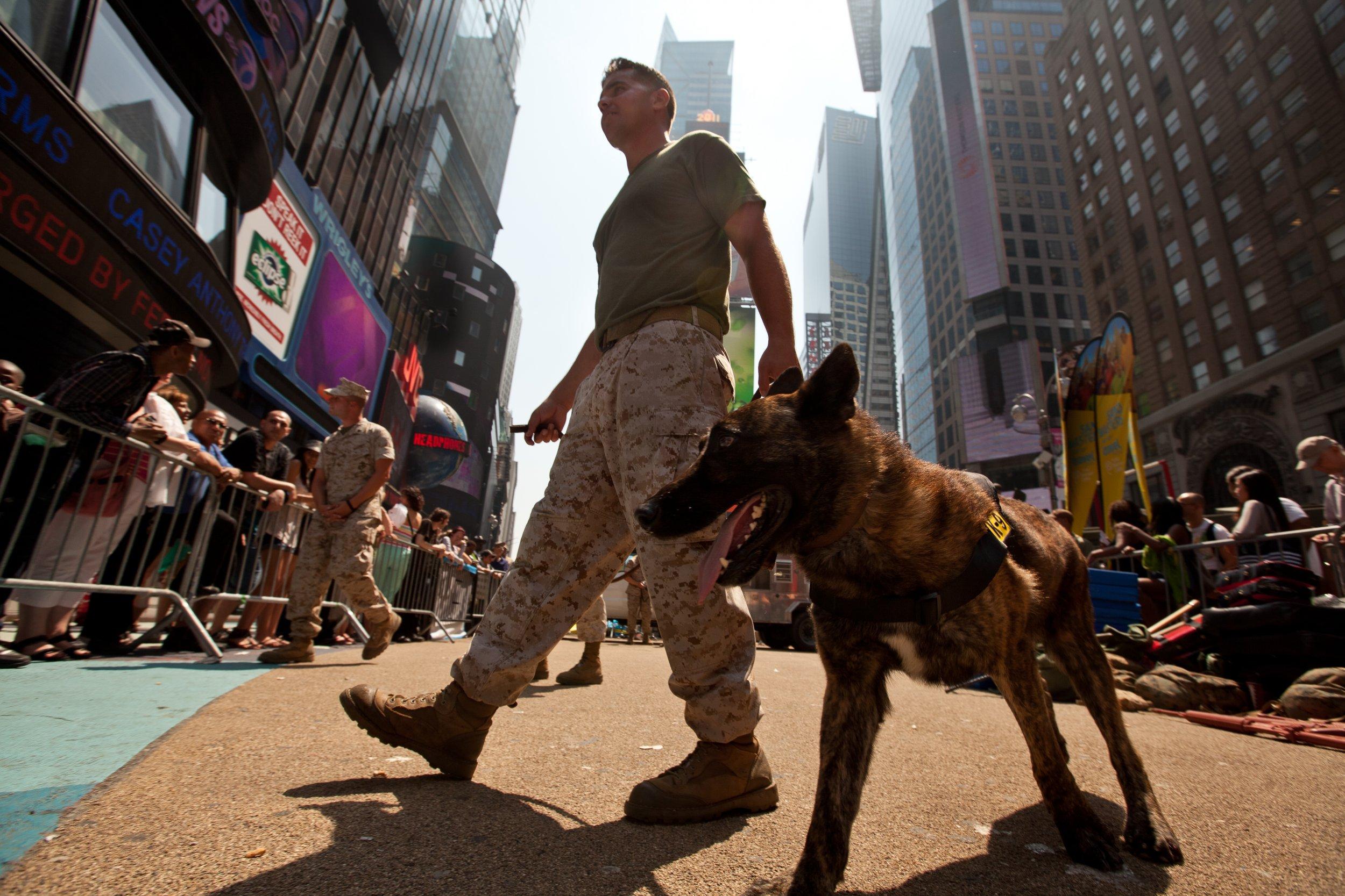 service_dog_soldier