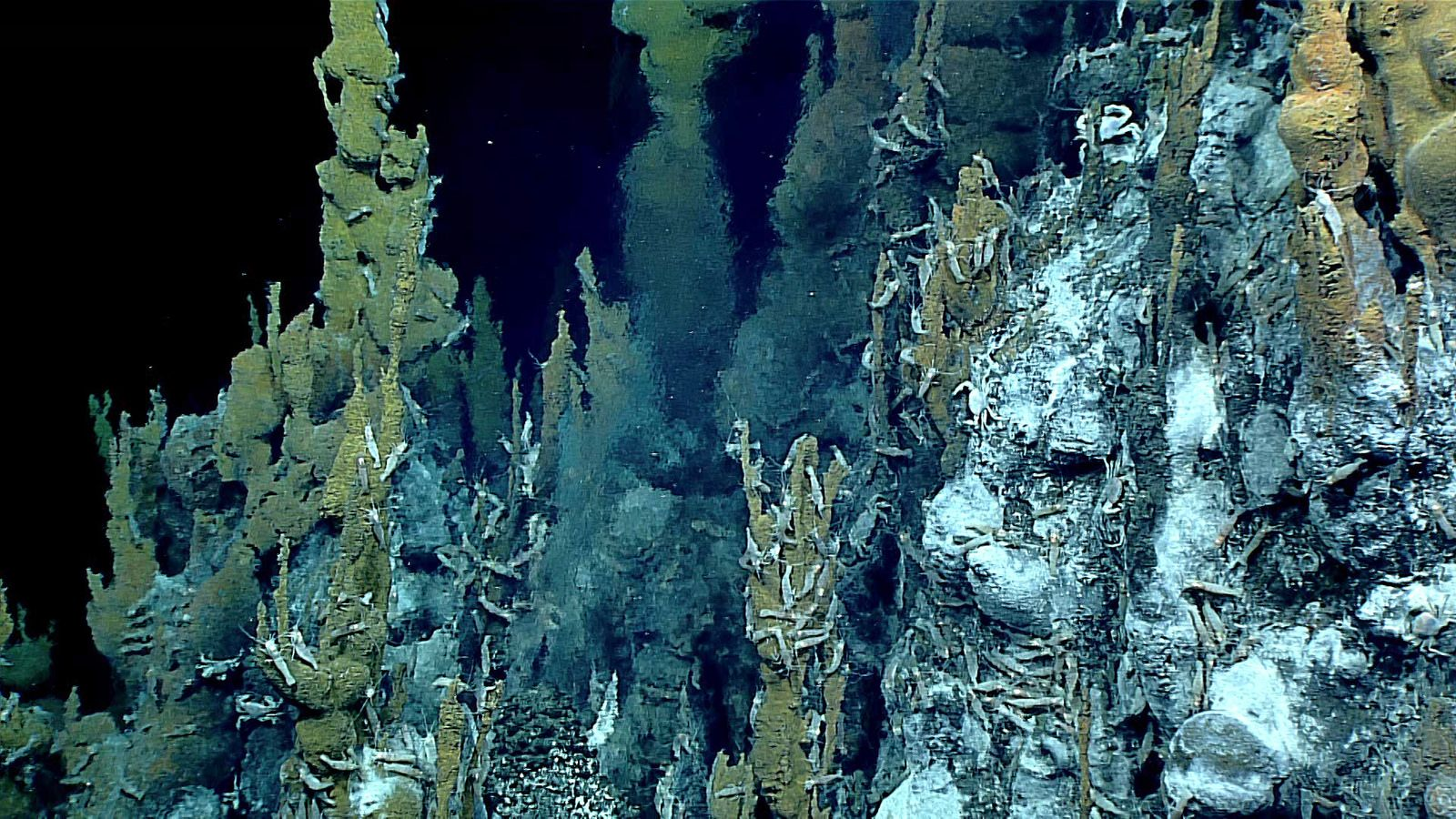 11_10_hydrothermal_vent_life