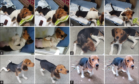 11_13_dog spinal cord surgery