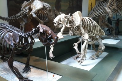 Ground sloths in a museum