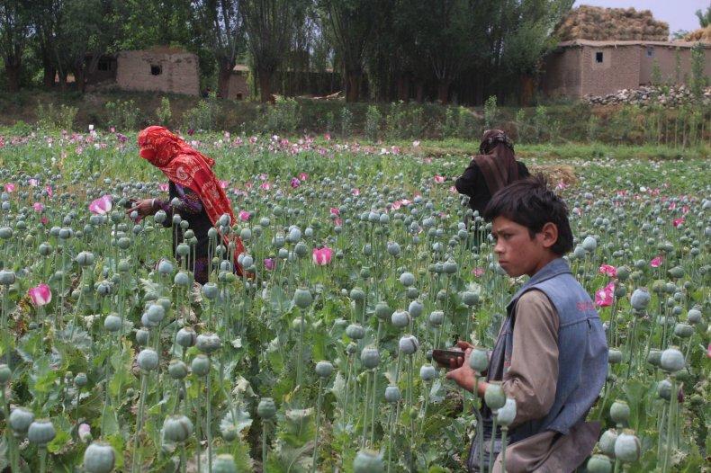 11_15_Afghanistan_opium
