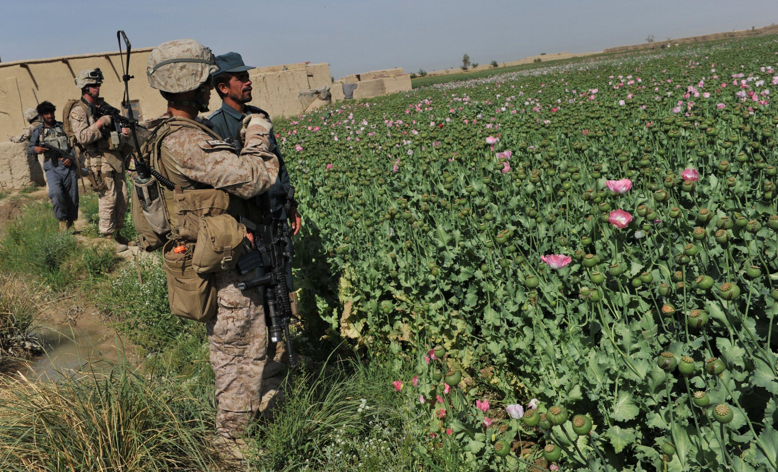 11_15_Trump_opium_Afghanistan