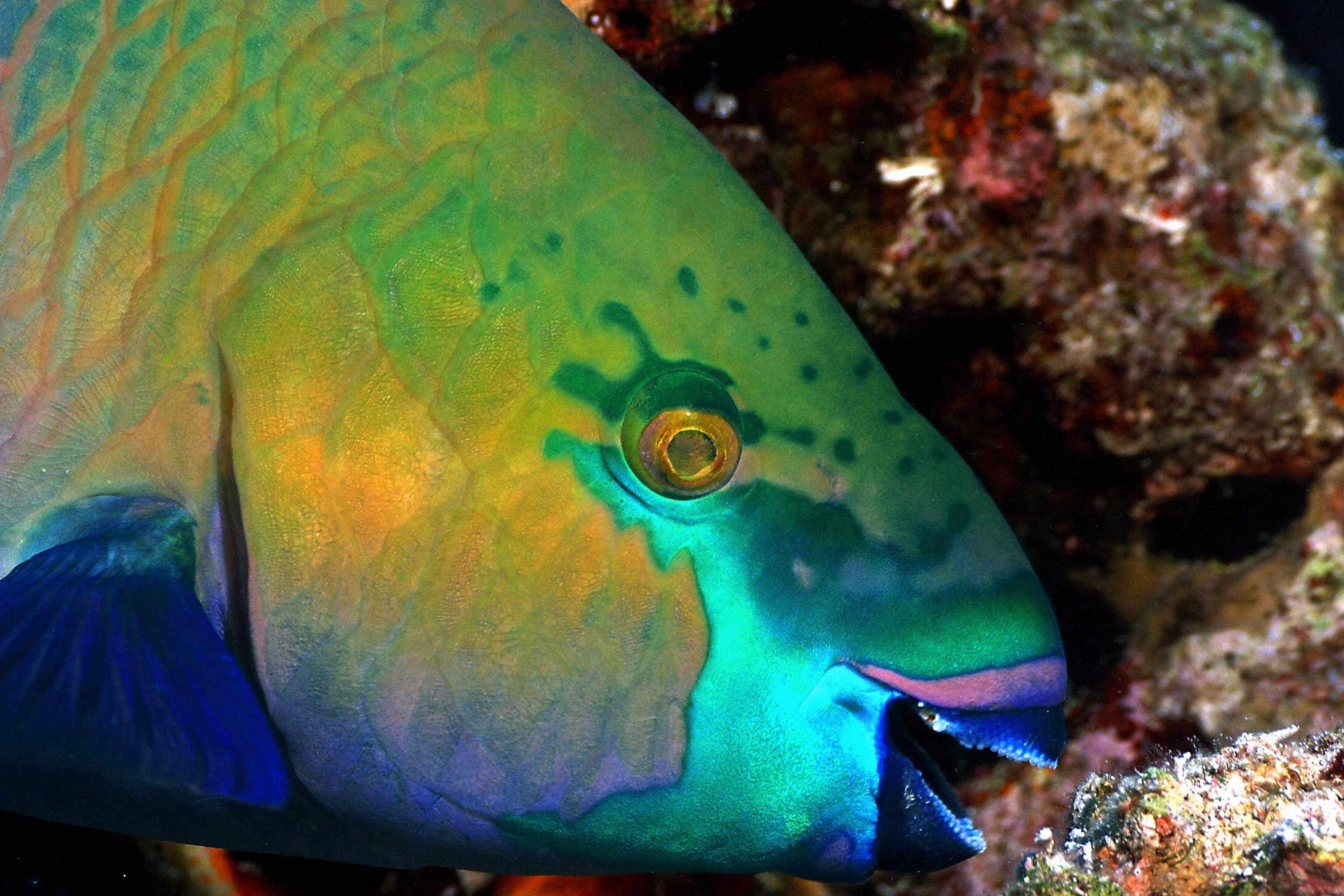 Where Does Sand Come From Parrotfish Poop Makes White Beaches And Now Scientists Know How