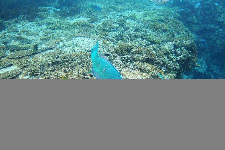 11_16_parrotfish2