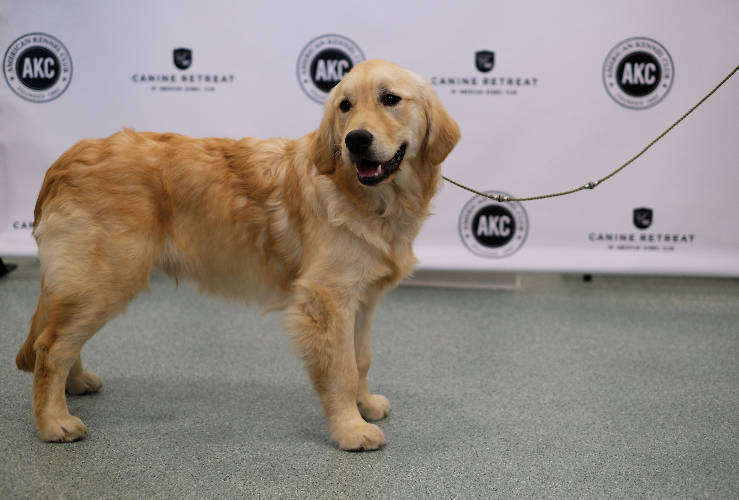 Your Golden Retriever May Be Good For Your Heart