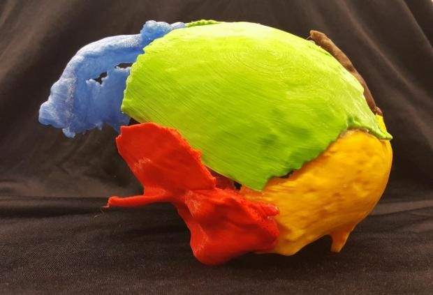 Gorm the Old reconstructed skull 3D print
